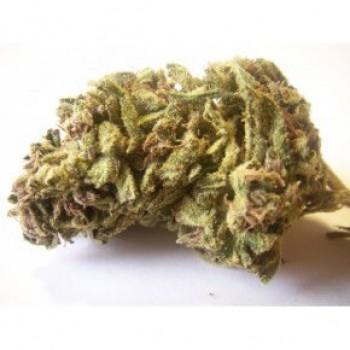 Jack Herer Medical Marijuana Strain