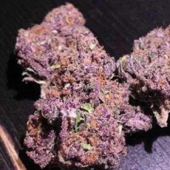 Panama Red Medicinal Marijuana
