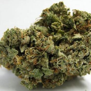 Redwood Kush Marijuana Strain